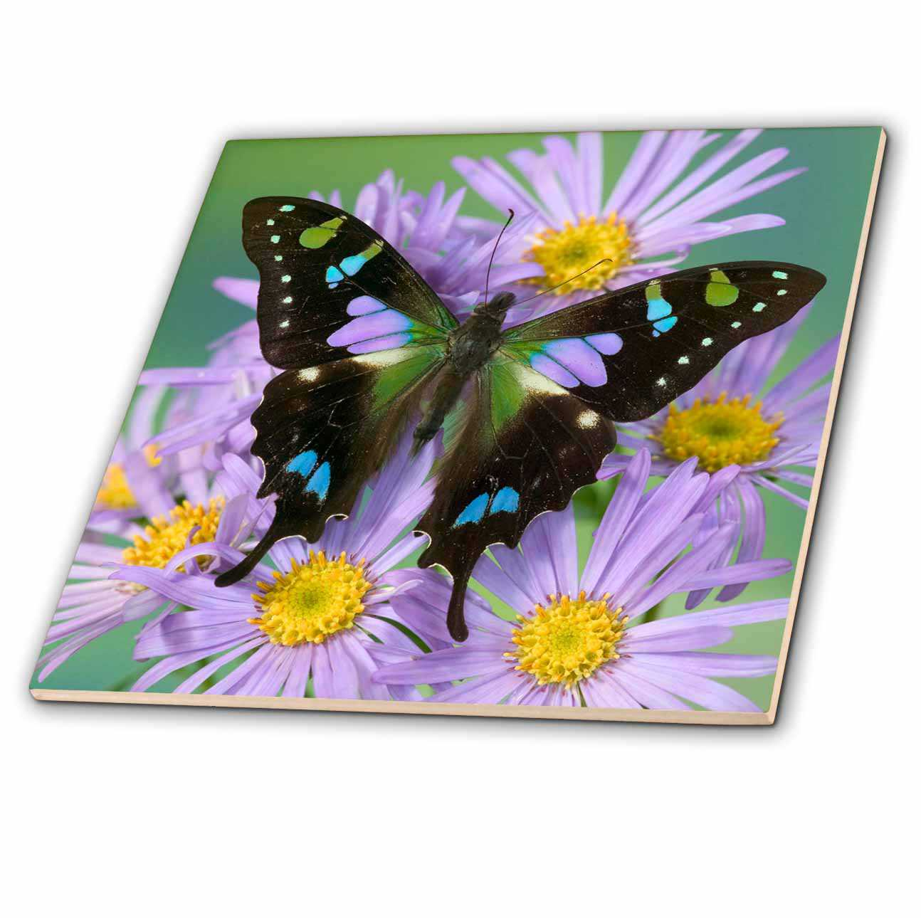 3dRose Butterfly on Flowers, Purple Spotted Swallowtail - US48 DGU0519 - Darrell Gulin - Ceramic Tile, 8-inch