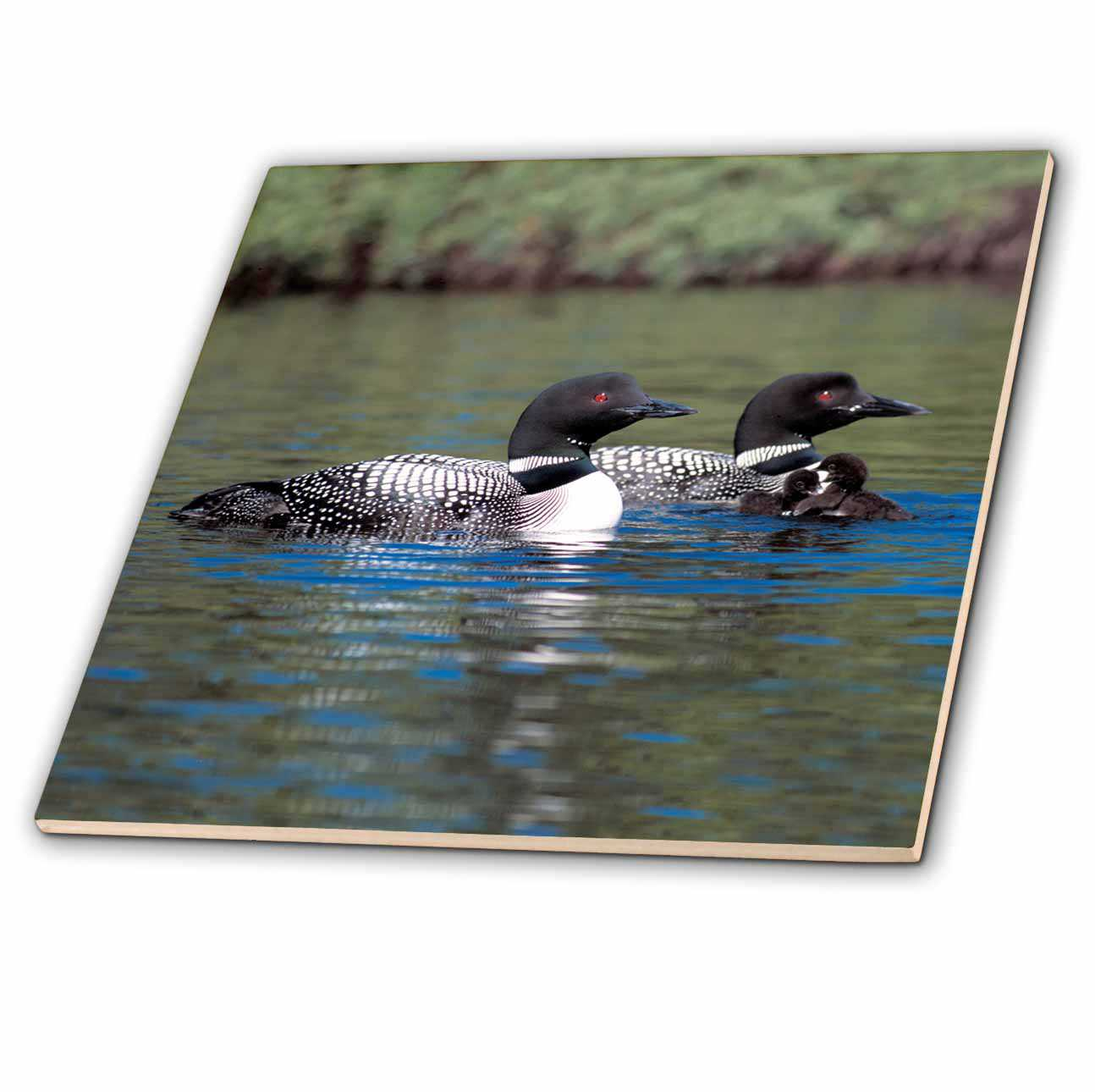 3dRose Family of Three Loons - Ceramic Tile, 4-inch